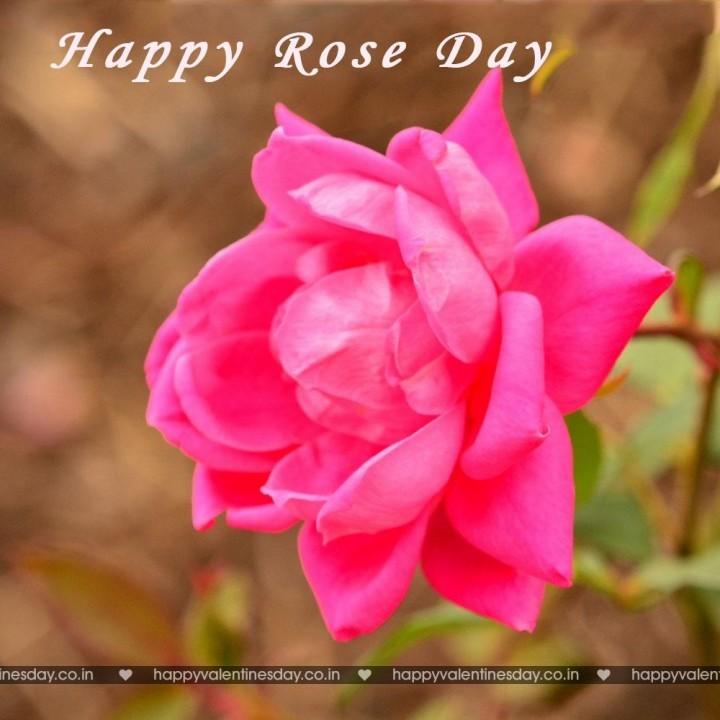 Rose Day – happy valentines day husband | Happy Valentines Day ...